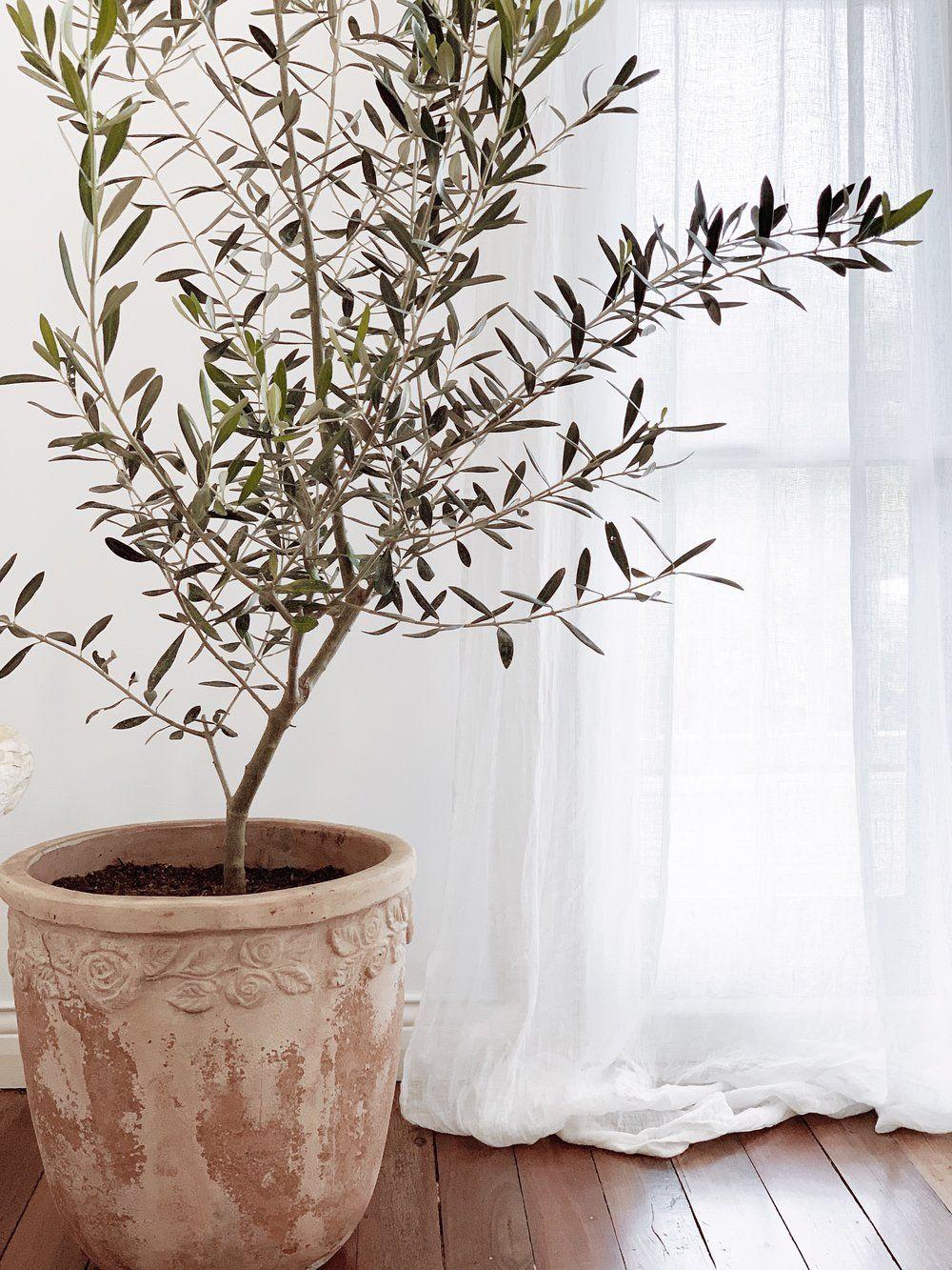 olivier sur parquet bois